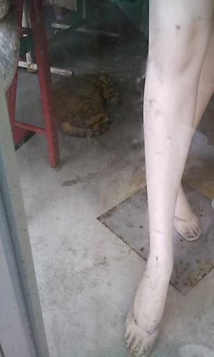 ショーウインドウ猫さん2