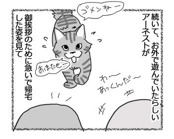 02022017_cat3.jpg