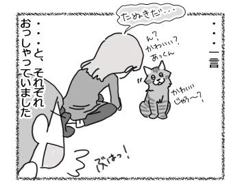 02022017_cat4.jpg