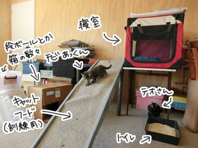 04022017_cat4.jpg