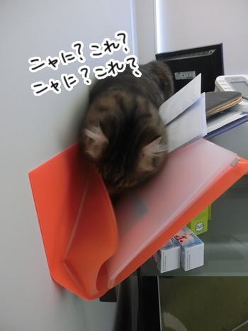05012017_cat1.jpg