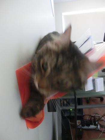 05012017_cat3.jpg
