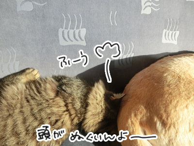 05022017_cat4.jpg