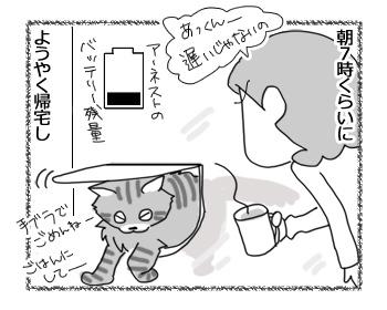 06022017_cat2.jpg