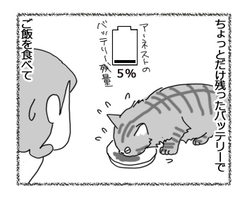 06022017_cat3.jpg