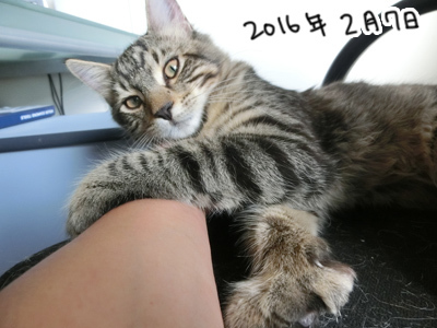07022017_cat6.jpg