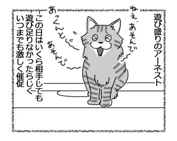 11012017_cat1.jpg