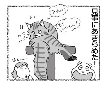 11012017_cat4.jpg