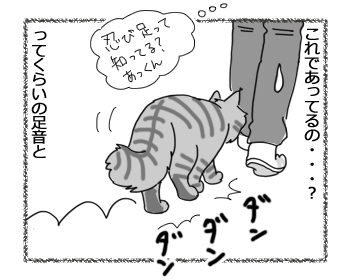12012017_cat4.jpg