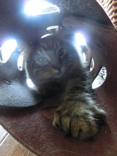 12012017_cat6.jpg