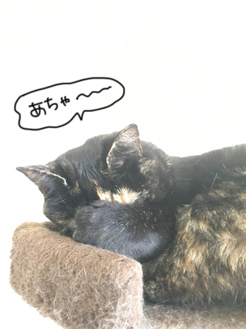 15012017_cat7.jpg