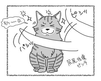 18012017_cat3.jpg