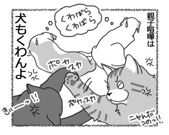 19012017_cat4.jpg
