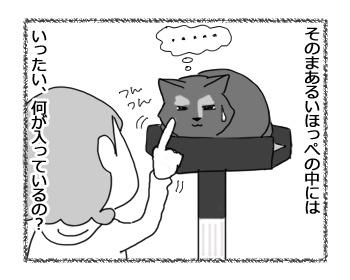 23012017_cat4.jpg