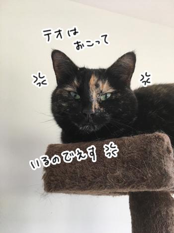 23012017_cat5.jpg