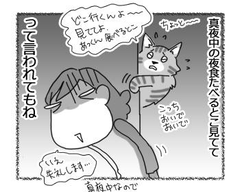 24012017_cat4.jpg