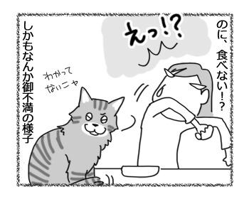25012017_cat3.jpg