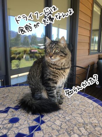 25012017_cat5.jpg