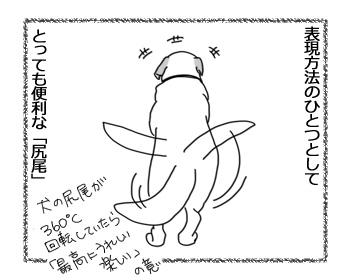 26012017_cat1.jpg