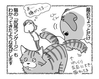 26012017_cat2.jpg
