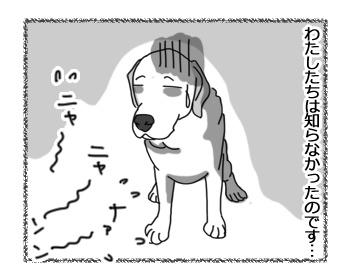 27012017_cat2.jpg