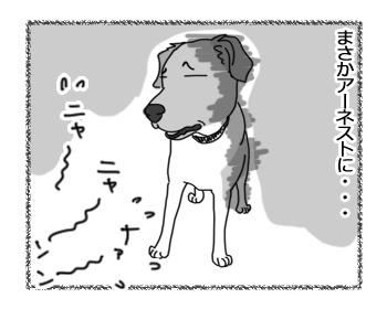 27012017_cat3.jpg