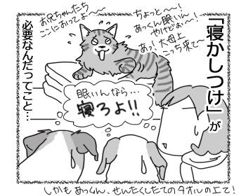 27012017_cat4.jpg