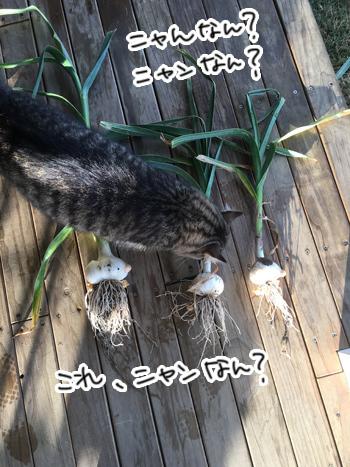 28012017_cat2.jpg