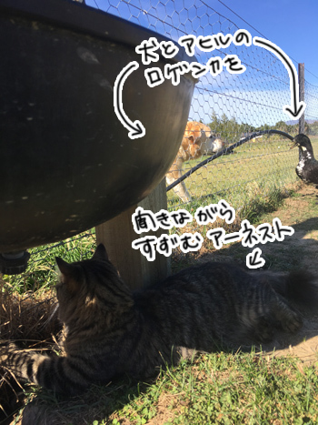 28012017_cat3.jpg