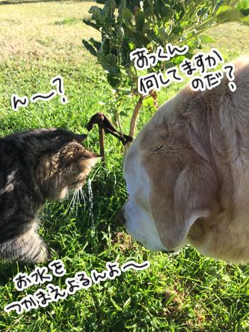 28012017_cat4.jpg