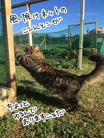 28012017_cat5.jpg