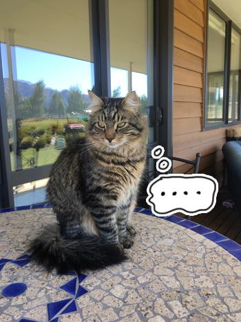 29012017_cat2.jpg