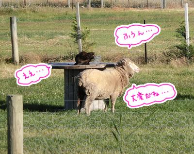 30122016_cat2.jpg
