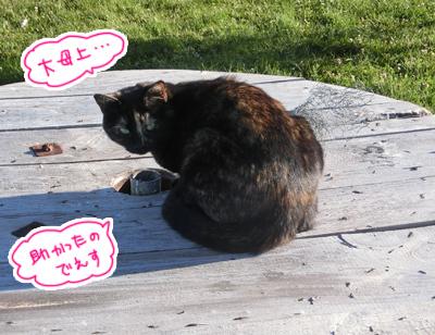 30122016_cat5.jpg