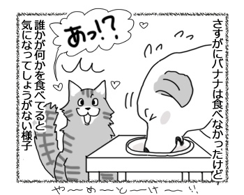 31012017_cat3.jpg