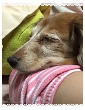 お姉ちゃんの腕枕