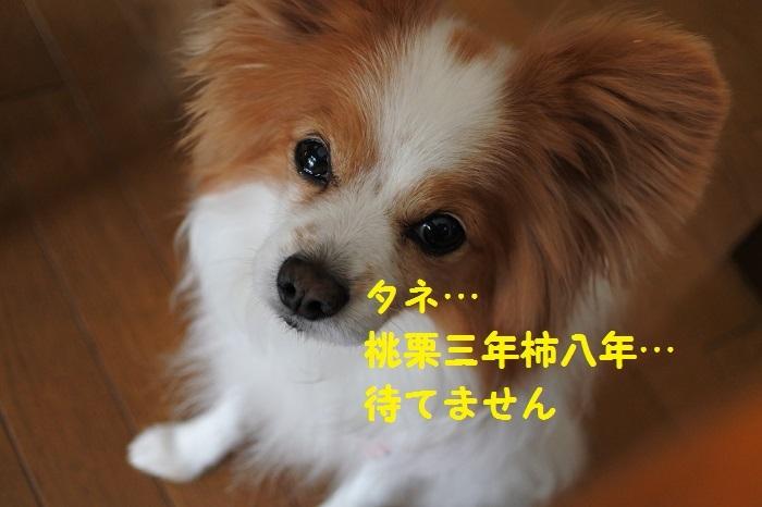 DSC_3768.jpg