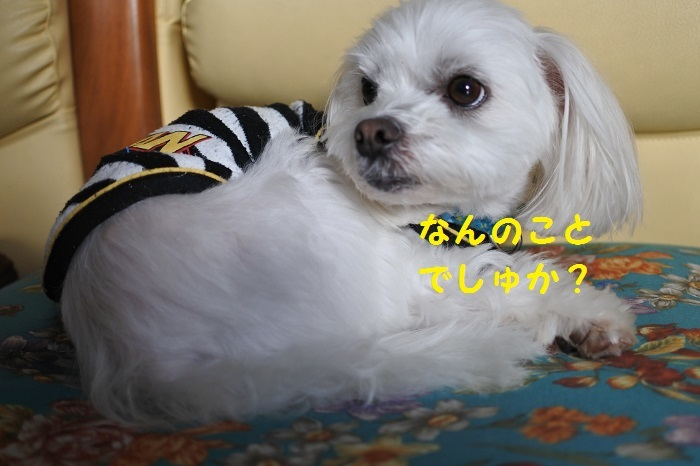 DSC_3770.jpg