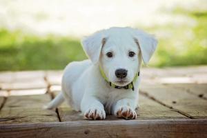 puppy-1903313_960_720_convert_20170111004729.jpg