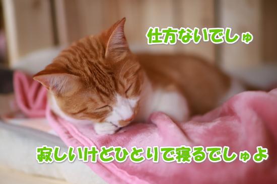 16_201811231604306e3.jpg