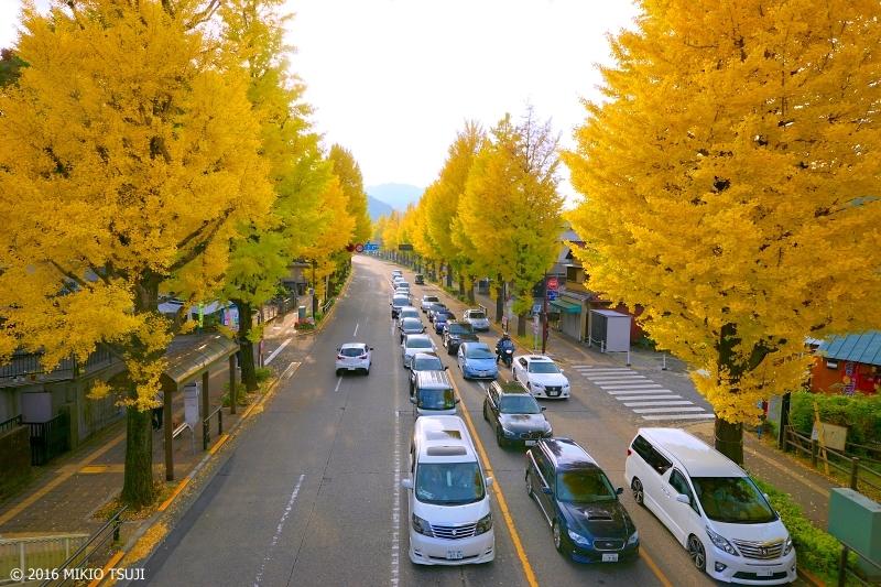 絶景探しの旅- 0038 甲州街道いちょう並木 (東京都 八王子市)